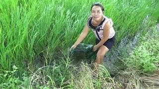 Download Living off the land in Rural Thailand, Fishing in the rice paddy Video