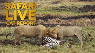 Download The Cat Report: 19 - 25 August Video