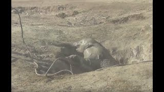 Download After This Baby Elephant Fell Into A Well, Rescuers Braved The Wrath Of Her Mom To Free Her Video