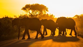 Download Kruger National Park morning nature sounds: Talamati bush camp | Relaxing & peaceful animal noises Video