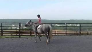 Download How to Stay on when your horse Freaks out! Video
