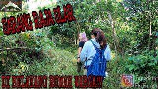 Download SARANG RAJA ULAR BERBISA // KING COBRA // DI BELAKANG RUMAH WARGA!!! #kingcobra #venomoussnake Video