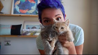 Download Covered With Kittens Ep. 24, Hairball (Sarah Donner) Video