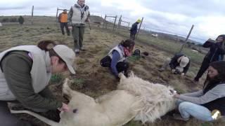 Download Wildlife Veterinary Course & Practical Experience   Wild Spirit 2015 Video
