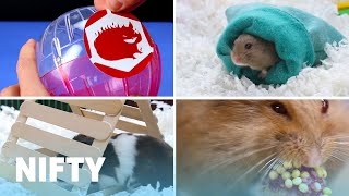 Download Cute And Cuddly DIY Projects For Your Hamster Video