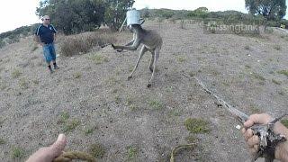 Download Giant kangaroo - head stuck in watering can! Video