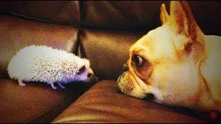 Download Cute Funny Pets 😜😜 Funny Pets (Full) [Funny Pets] Video