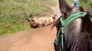 Download CAVALGADA DE UNIFLOR 02/05/2010 Video