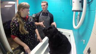 Download DAY IN THE LIFE DOG GROOMER Video