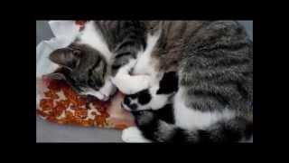 Download Überraschung meiner Katze ... Katzenbabys !! Video