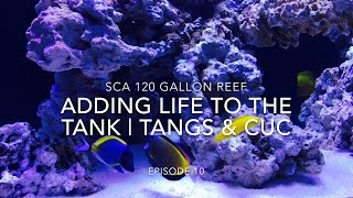 Download SCA 120 Gallon Reef Tank | Ep.10 | Adding Life To The Reef - Tangs, Angels & Clean Up Crew Video