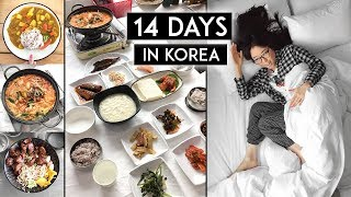 Download 14 Days in Korea ♦ SO MUCH FOOD! 🍲 🍰 🍜 Video