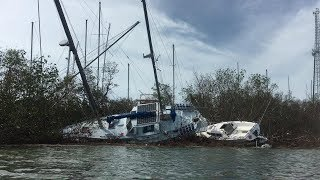 Download Surveying our Morgan OI after hurricane Irma...FWC gets it out Video