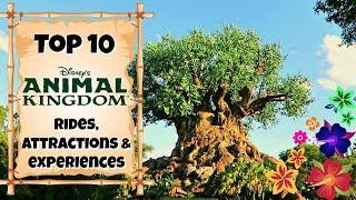 Download TOP 10 Animal Kingdom rides & experiences   Walt Disney World 2017 Video