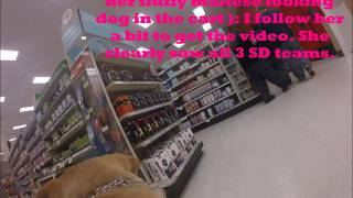 Download Pet Encounter at Target Video