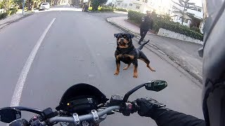 Download Angry Dogs Vs BIKERS 🌟 DOGS ATTACKED MOTORCYCLE [Ep #02] 🌟 BEST Compilation 2017 Video