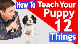 Download How Many Things Can you Teach your Puppy at Once? Video