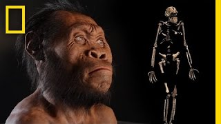 Download New Human Ancestor Discovered: Homo naledi (EXCLUSIVE VIDEO) | National Geographic Video