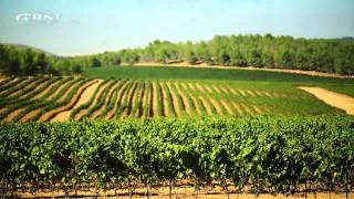 Download Made in Israel: Agriculture Video
