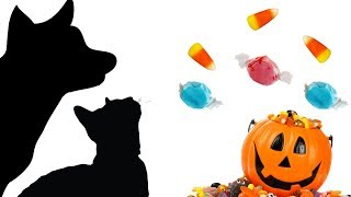 Download CAT GAMES - HALLOWEEN CANDY CATCH (FOR CATS ONLY) Video