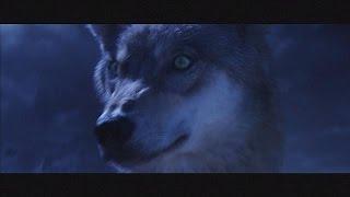 Download فیلم«طلسم گرگ»، محصول مشترک چین و فرانسه - cinema Video