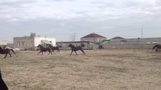 Download Bakida ereb atlari Video