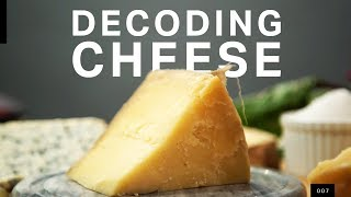 Download The microbial truth of how your cheese gets made Video