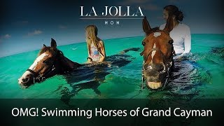 Download Swimming Horses of Grand Cayman Video