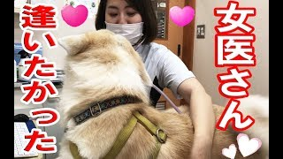 Download AkitaInu女医に恋する秋田犬・逢いたかったですveterinary hospital Video