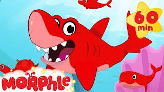 Download Shark, Dolphin, Turtle, and Whale Morphle shorts +1 hour Morphle kids compilation) Video