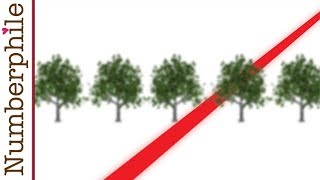 Download Tree Gaps and Orchard Problems - Numberphile Video