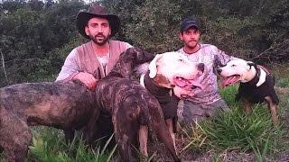 Download Caçada de Javali com Cães de Agarre Video