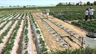 Download Impact of Water Scarcity on China's Food Security (old version) Video