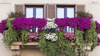Download Best Small Balcony Garden Design Ideas - Beautiful House Video