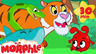 Download Morphle and the Scary Animal Bandits - Snake, Tiger, Shark, Lion and Dinosaur Videos for kids Video