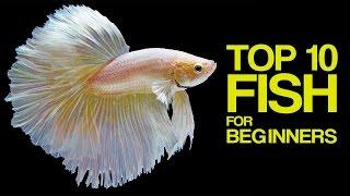 Download Top 10 Aquarium Fish for Beginners Video