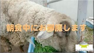Download 天王寺動物園【朝食中にお邪魔します】 Video