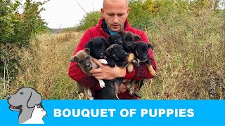 Download Six Puppies Rescued from Bushes Video