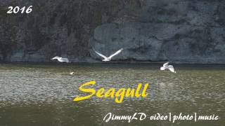Download Seagull geese ducks fight for food Video