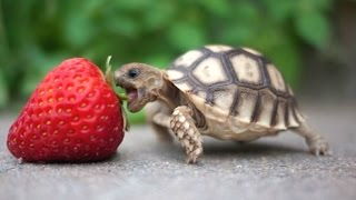 Download Turtle / Tortoise - A Funny Turtle And Cute Turtle Videos Compilation || NEW HD Video