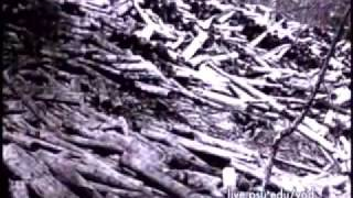 Download Pennsylvania Forest History Video