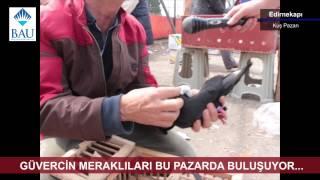 Download İstanbul-Edirnekapı Kuş Pazarı Video