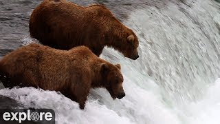 Download Brooks Falls - Katmai National Park, Alaska powered by EXPLORE.org Video