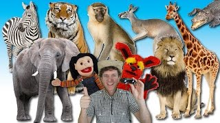 Download What Do You See? Song | Wild Animals | Learn English Kids Video