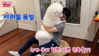 Download 고작 하루만에 주인을 만난 강아지 반응은? Video