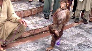 Download Akshay Kumar Ki Tarah Karta Hai Saare Action Ye Bandar | Comedy Video From My Phone Video