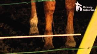 Download Emst: paarden, pony's verwaarloosd Video