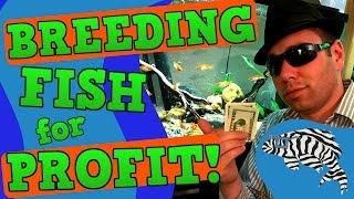 Download Breeding Fish for Profit - Top Five Tips Video