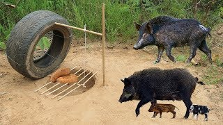 Download Amazing Quick Wild Pig Trap Using Car Wheel And Deep Hole - How To Make Wild Pig Trap Car Wheel Video