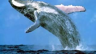 Download Endangered Species - A Short Video Video